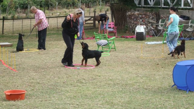 Puppy training at Grietjiesdrif Guest House