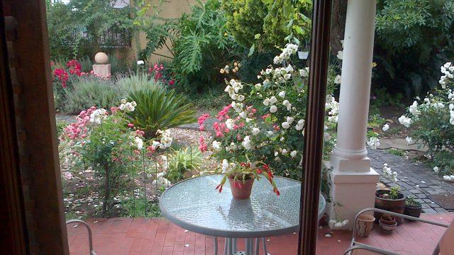 Rawsonville House: Garden of roses