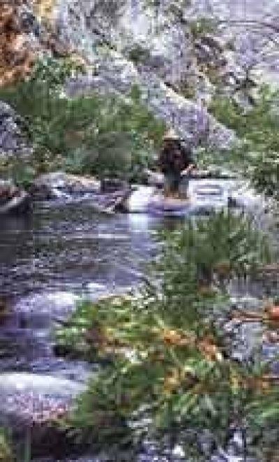 Fly Fishing @ Dwarsberg Trout Hideaway